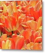 United States Capital Tulips Metal Print