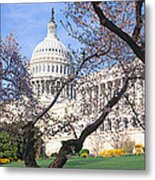 Us Capitol Building And Cherry Metal Print