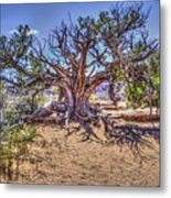Utah Juniper On The Climb To Delicate Arch Arches National Park Metal Print