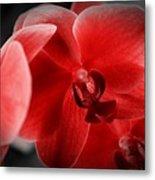 Valentine Orchid Metal Print