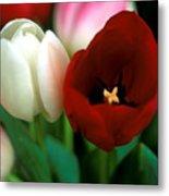 Valentine Tulips Metal Print