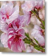 Valley Blossoms Metal Print