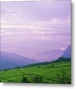 Valley Of Vineyards Metal Print