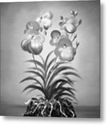Vanda Orchids In Black And White Metal Print