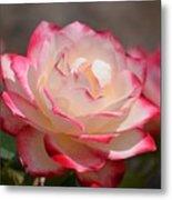 Vanilla Cherry Rose Metal Print