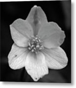 Vanishing Beauty 3 Metal Print
