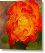 Variegated Beauty - Rose Floral Metal Print