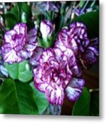 Variegated Carnations Metal Print