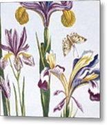 Variegated Iris Metal Print