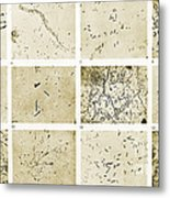 Various Bacilli Observed By Robert Koch Metal Print