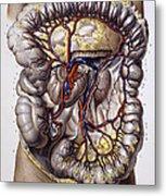 Veins And Arteries, 19th Century Metal Print