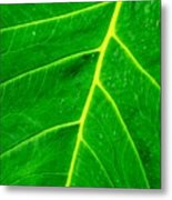 Veins Of Green Metal Print