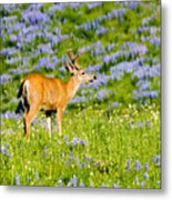 Velvet On Lupine Metal Print