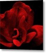 Velvet Rose Metal Print