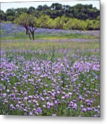 Verbena And Blue Bonnet Landscape Metal Print