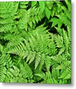 Verdant Ferns Metal Print