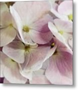 Verging On Violet Metal Print