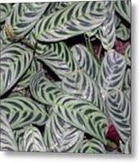 Verigated Green Leaves Metal Print