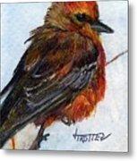 Vermillion Flycatcher Metal Print