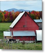 Vermont Cows At The Barn Metal Print