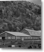 Vermont Farm With Cows Autumn Fall Black And White Metal Print