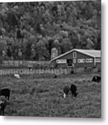 Vermont Farm With Cows Black And White Metal Print