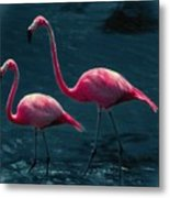 Very Pink Flamingos Metal Print
