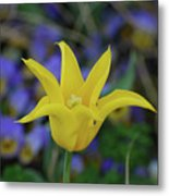 Very Pretty Yellow Tulip With Spikey Petals Metal Print
