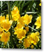 Very Sunny Yellow Flowers Metal Print