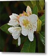 Very Wet Flower Metal Print
