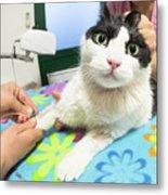 Veterinarian Cat Care Metal Print