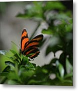 Vibrant Colors To A Orange Oak Tiger Butterfly Metal Print