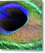 Vibrant Colours Of A Peacock Feather Metal Print