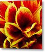 Vibrant Dahlia Petals Metal Print