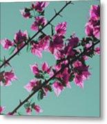 Vibrant Pink Flowers Bloom Floral Background Metal Print