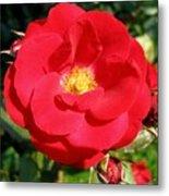 Vibrant Red Rose Metal Print