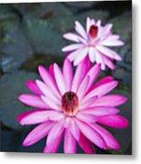 Vibrant Waterlilies Metal Print by Dana Edmunds - Printscapes