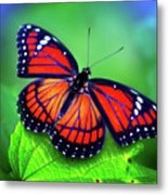 Viceroy Perch Metal Print