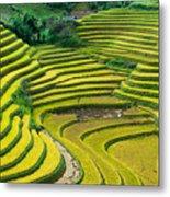 Vietnam Rice Terraces Metal Print