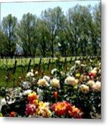 View From Bridlewood Vineyards Metal Print