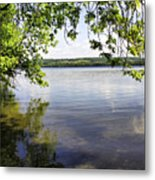 View From Under At Lake Carmi Metal Print