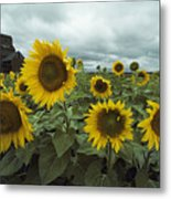 View Of A Field Of Sunflowers Metal Print