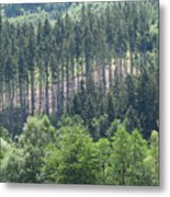View Of The Mixed Forest Metal Print