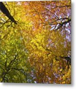 View To The Top Of Beech Trees Metal Print