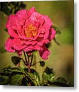 Vignetted  Rose Metal Print