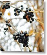 Vignettes - Indigo Winter Berries Metal Print