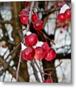 Vignettes - Snow Fruit Metal Print