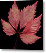 Vine Leaf Metal Print