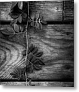 Vine On Barn Metal Print