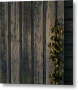 Vine On Wood Metal Print